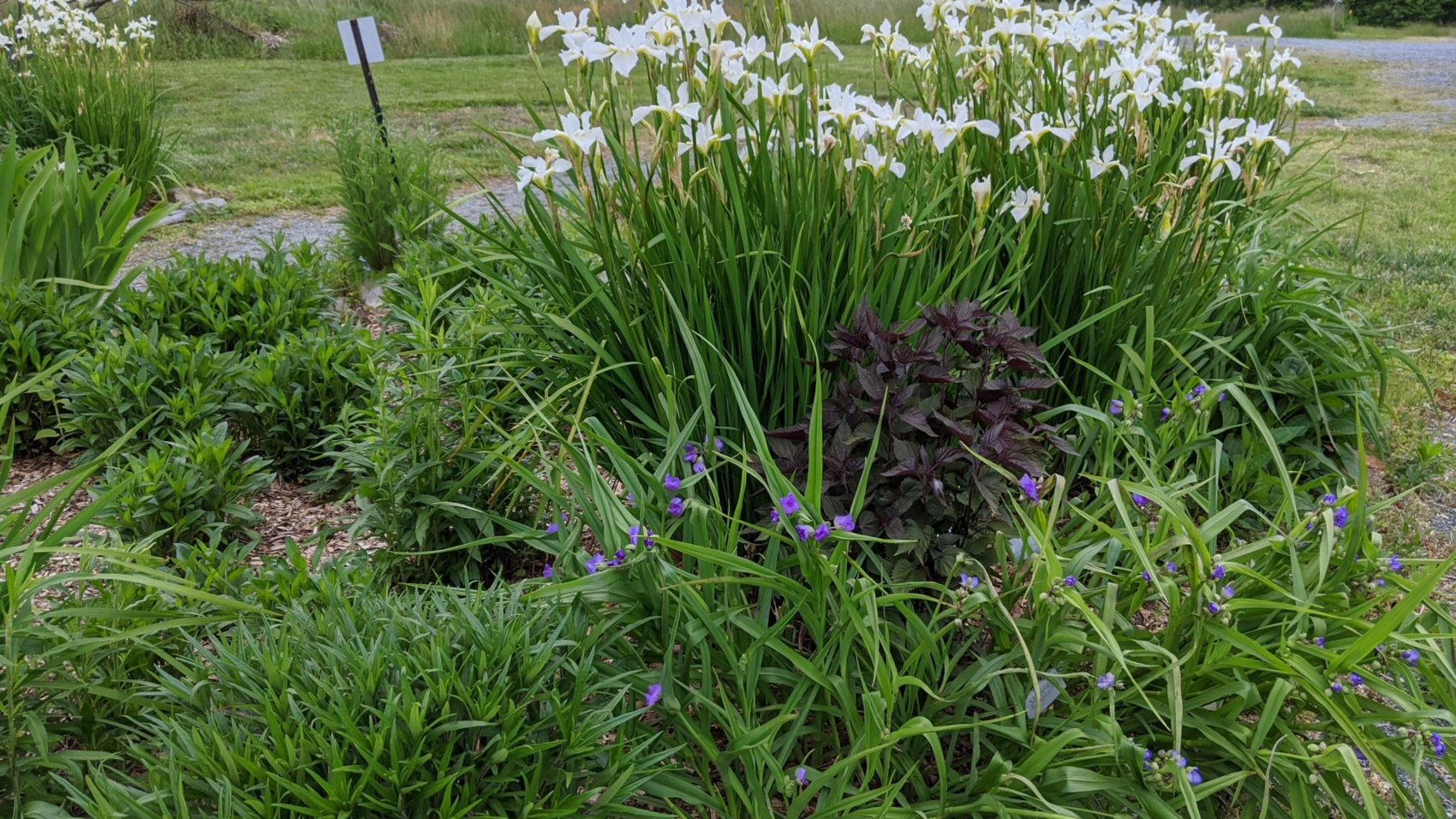 Spring butterfly garden
